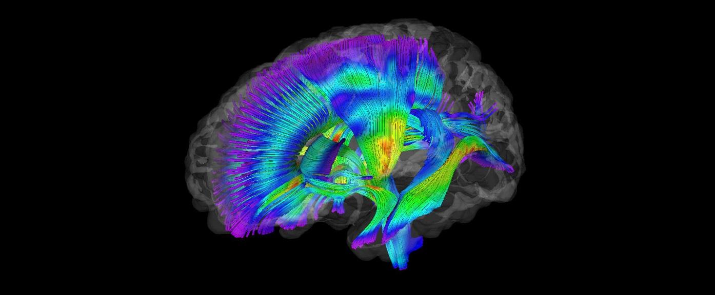 Zaburzenia mowy w uszkodzeniach mózgu                                5-6-7 lipca 2019                                                                    Letnia Szkoła Afazji Marleny Puchowskiej